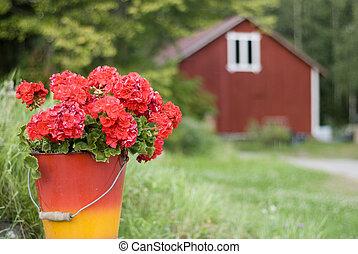 geranium - red geranium in bucket against Finnish country