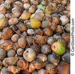 Closeup Coconuts