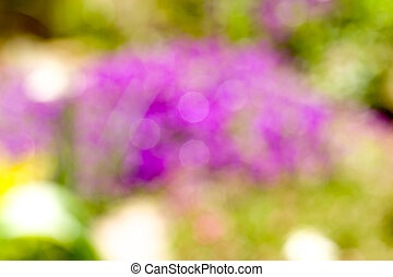 blurry background of flower - violet blurry background of...