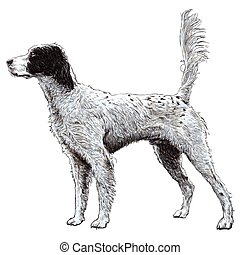 English setter - Image of English setter hand drawn vector