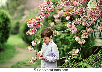 a little boy, and cherry blossoms - a little boy in a shirt...
