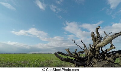Root of a Tree and Clouds - The Dried Root of a Tree on a...