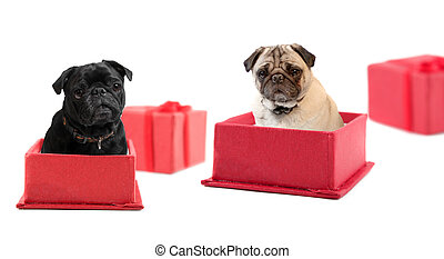 Pug Presents - Black and fawn colored pugs sitting inside a...