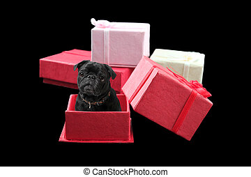 Pug Present - Black pug inside a red gift box with other...