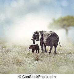 Éléphants,