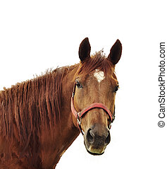 Brown Horse - Digital Painting Of Brown Horse Head