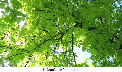 Summer Deciduous Forest - A Light Breeze in the Summer...