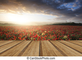 Stunning poppy field landscape under Summer sunset sky with wood