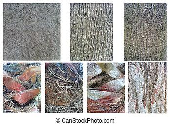 Set of Trunk Wood Background Photo