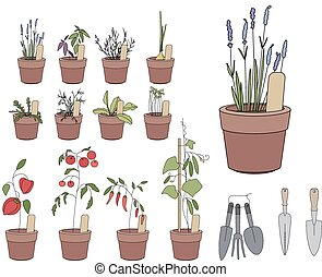Flower pots with herbs and vegetables. Gardening tools....