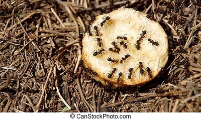 Ants in the anthill - Pastries thrown into anthill