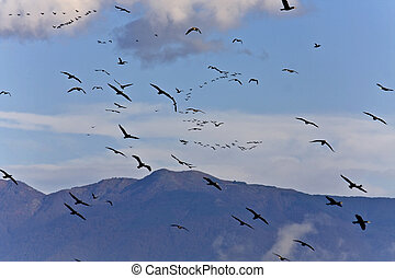 Birds flying to warmer areas for the winter