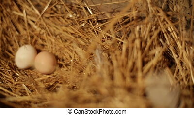 Female hands taking eggs in a nest in the barn