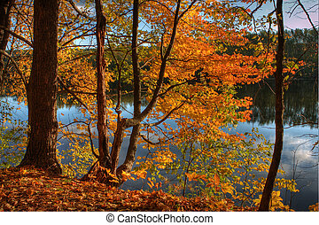 HDR of Trees on a Riverbank. - HDR of trees on the banks of...