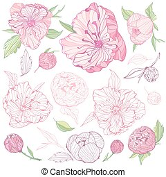 Set of isolated Peony Flowers - Vector collection of...