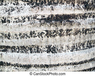 Palm tree bark texture