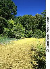 summer landscape with bog