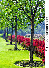 Tree Line - A line of young trees in a park in Shanghai,...