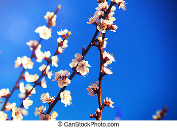 Spring flowers, Spring blossom background, on blue sky