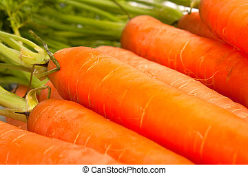 carrot - orange carrots with green stems