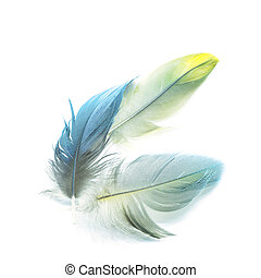 bird feathers isolated - Colorful bird feathers, isolated on...