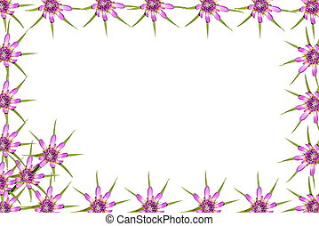 Abstract red purple flowers frame