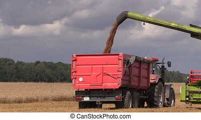 harvested grain - Agriculture machine load harvested grain...