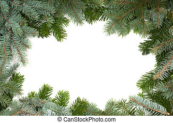 fir twig frame on white background