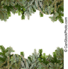fir twig frame  - green fir twig frame on white background