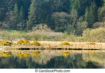 Llyn Cwellyn Snowdonia - Landscape of early spring time at...