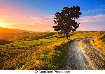 Tuscany, lonely tree and rural road on sunset. Volterra, Italy.