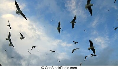 Flock of birds soaring high against the blue sky