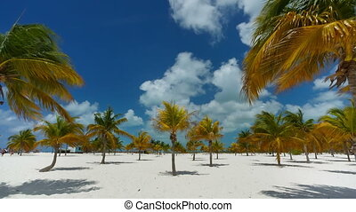 Palm trees at the Sirena beach at Cayo Largo