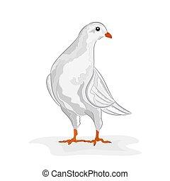 White dove vector.eps - White dove White pigeon symbol peace...