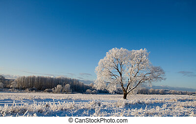 Frost covered tree