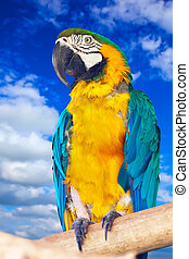 Green-winged macaw against sky - Green-winged macaw (Ara...
