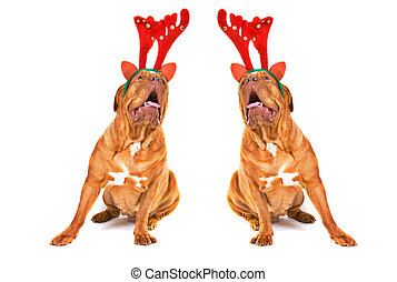 Two Singing Christmas Reindeer Dogs - Two Dogues De Bordeaux...