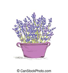 Seamless lavender pattern - Hand drawn lavender flowers in...