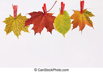 Autumn leaves on linen clothespins