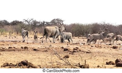 Waterhole in Etosha with many anima - Waterhole in Etosha...