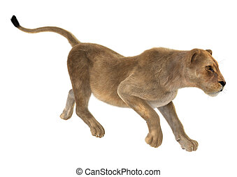 Female Lion - 3D digital render of a female lion isolated on...