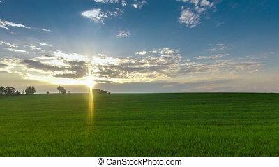 green field sunshine sun summer - green field sunshine sun...