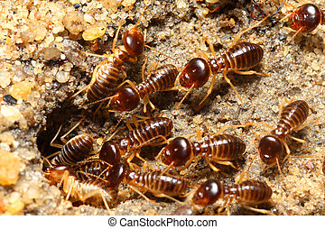 group of termites entering into soil
