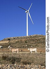 Cow cattle under electric windmills in blue sky