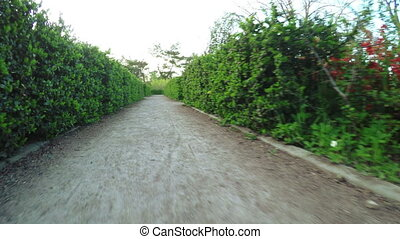 Labyrinth of bushes - Camera on steadicam moves through maze...