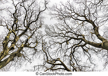Leafless Treetops - Picture on treetops with leafless trees