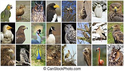 collage birds - Collage of wild birds in the wild