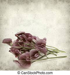 textured old paper background with Tangier pea