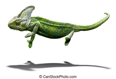 Colorful chameleon closeup isolated on white with shadow -...