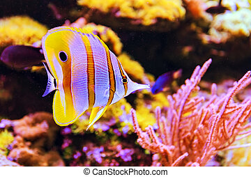 Indian Ocean - The marine life of the Indian Ocean